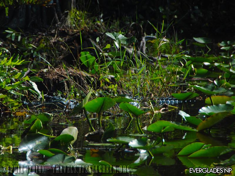 Np Everglades