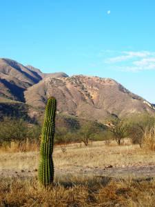 Cactus nearby Cumaral