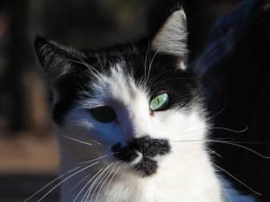 Mustachio!